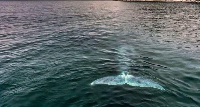 Туристов заманят в Хабаровский край китами