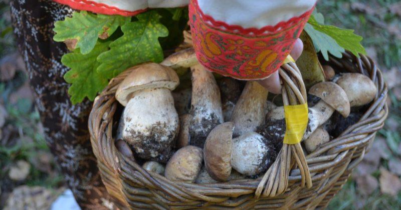 В Рязани — грибы с глазами